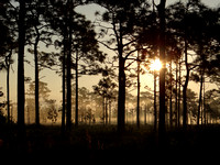 Disney Wilderness Preserve Sunrise