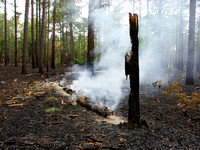 Prescribed Fire in the Sandhills